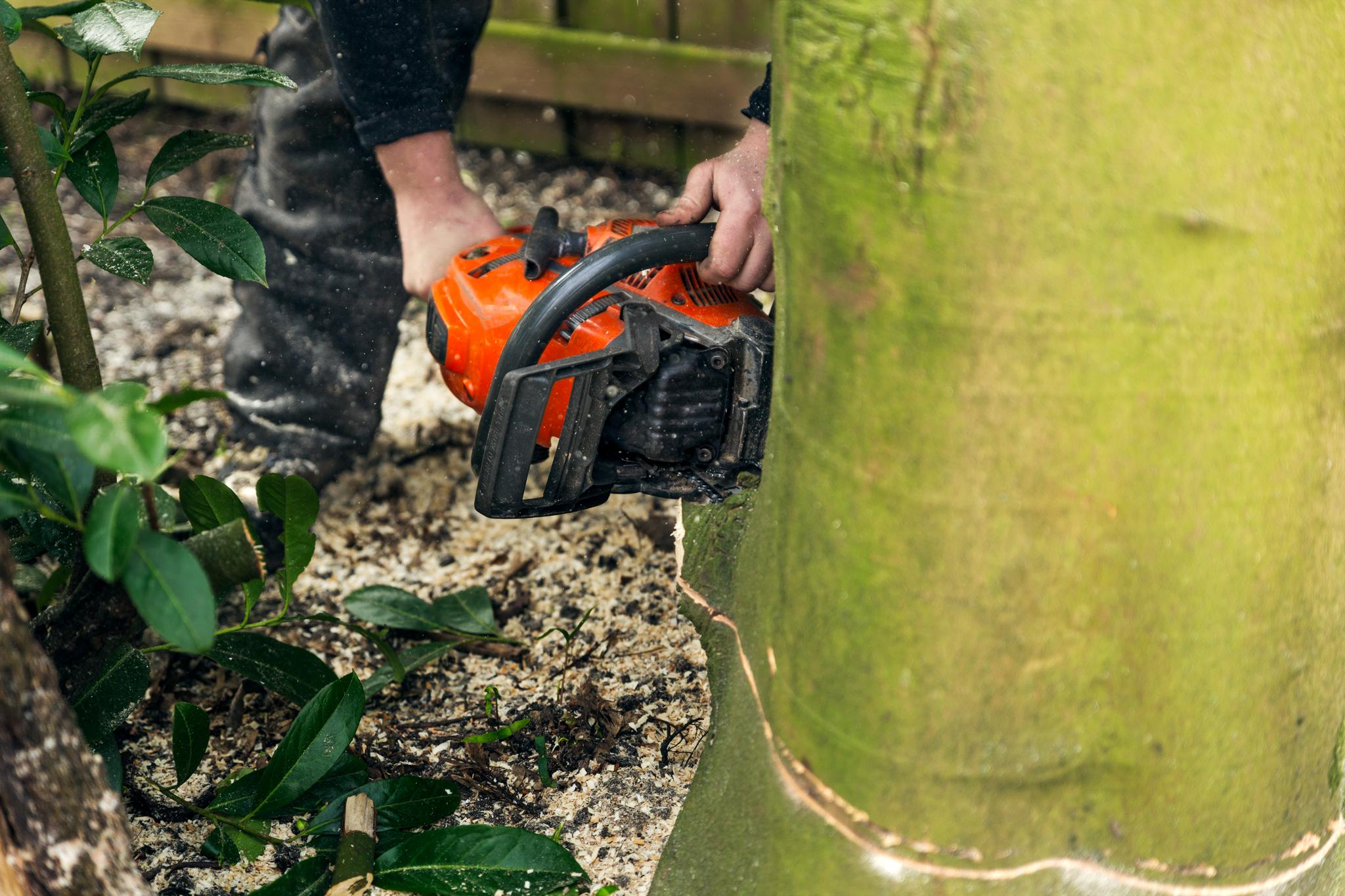Verwijderen van bomen